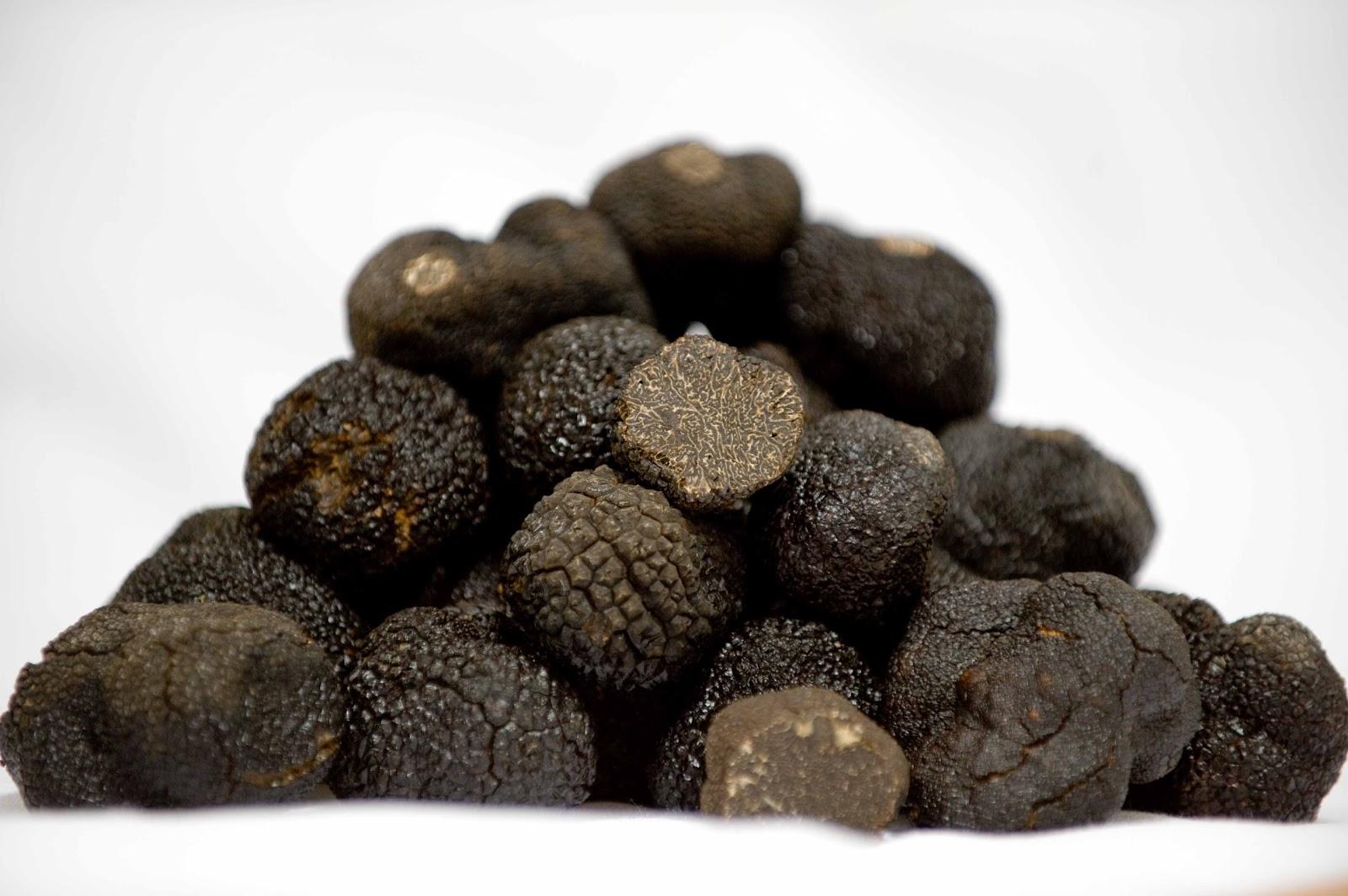 black_truffle_tuber_melanosporum-3
